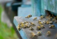 全部蜂飞行 库存图片