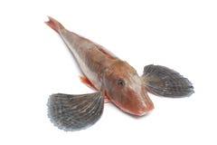 全部鱼鲂鱼红色唯一的木盆 免版税库存图片