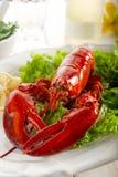 全部龙虾的沙拉 免版税库存照片