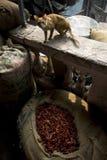 10 1986 2007 2011全部,因为baha德里房子我开始了印第安已知的莲花母亲新的11月人员服务次大陆寺庙崇拜 库存照片