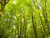 全部绿色树 图库摄影