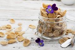 全麦谷物、莓果和可食的花一顿健康早餐的概念在一朵庭院紫罗兰在光 图库摄影