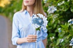八仙花属从事园艺 年轻美丽的妇女画象长的蓝色礼服的在圣地的米格尔,亚速尔群岛不可思议的开花的公园 图库摄影