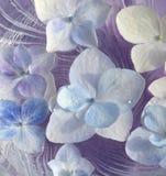 八仙花属瓣 免版税库存照片