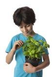 八岁的男孩采摘蓬蒿叶子 免版税库存图片