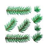 八根云杉的枝杈的例证 库存照片