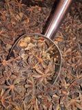 八角或八角茴香属verum 免版税图库摄影