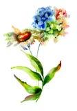八仙花属和春黄菊花 免版税库存图片