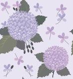 八仙花属和绿色灰色叶子 免版税图库摄影