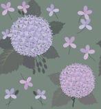 八仙花属和绿色灰色叶子 免版税库存照片