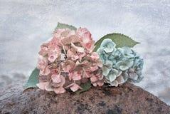 八仙花属在一块石头在水中开花,与纹理 免版税库存照片