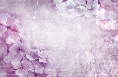 八仙花属花卉明信片 能使用当贺卡、邀请为婚姻,生日和其他假日发生 免版税库存照片