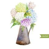 八仙花属花束 库存图片
