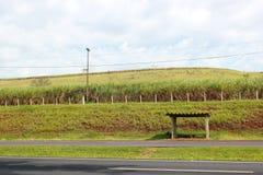 公交车站在巴西村庄 图库摄影
