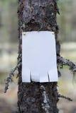 公告,信件,在一棵树的一则消息在森林里 免版税库存照片