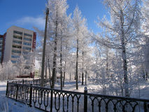 公园。自然冬天风景。 库存照片