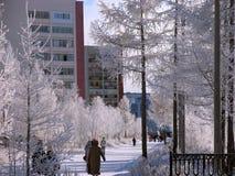 公园。自然冬天风景。 免版税库存图片