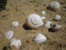 公园住宅蜗牛 库存照片