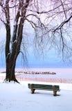 公园冬天 库存照片
