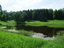 公园和森林在湖附近 库存照片