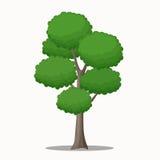 公园和森林场面的大和高树传染媒介例证 库存照片