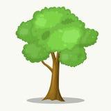 公园和森林场面的大树例证 免版税库存图片