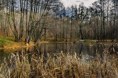 公园和自然在Ukkraine 免版税库存图片