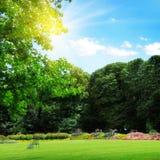公园和重新创建草坪 库存照片