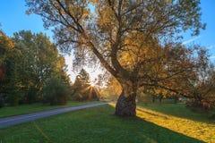 公园在一个早晨 免版税图库摄影
