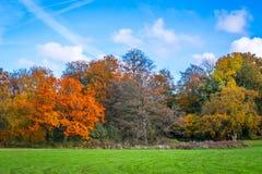 公园在与树的秋天 免版税库存图片