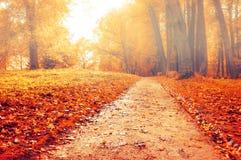 公园在与红色下落的叶子的秋天-秋天有薄雾的色的风景 免版税库存图片