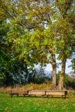 公园在与长凳的秋天 免版税图库摄影