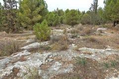 公园在以色列 samaria 免版税图库摄影