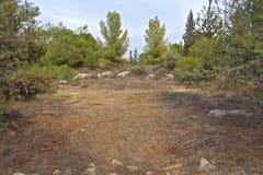 公园在以色列 samaria 图库摄影