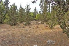 公园在以色列 samaria 库存图片