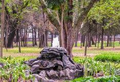 公园在墨西哥 库存照片