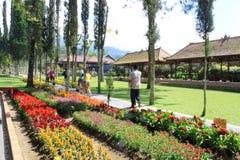 公园在巴厘岛 库存图片