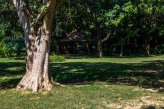 公园在新德里 图库摄影