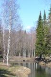 公园在春天 免版税库存照片