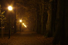 公园在晚上 图库摄影