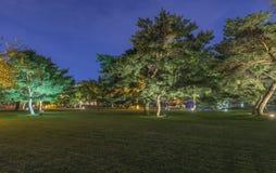 公园在晚上 库存图片