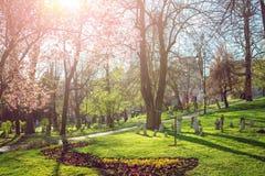 公园在有春天绽放的萨拉热窝 免版税图库摄影