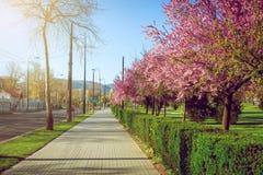 公园在有春天绽放的萨拉热窝 免版税库存照片