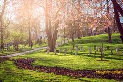 公园在有春天绽放的萨拉热窝 免版税库存图片