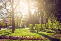 公园在有春天绽放的萨拉热窝 库存图片