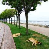 公园在海边 免版税图库摄影
