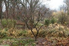 公园在秋天是美丽的 库存图片