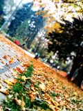 公园在秋天 免版税库存图片