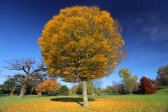 公园在秋天 免版税图库摄影