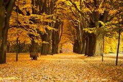 公园在秋天 图库摄影